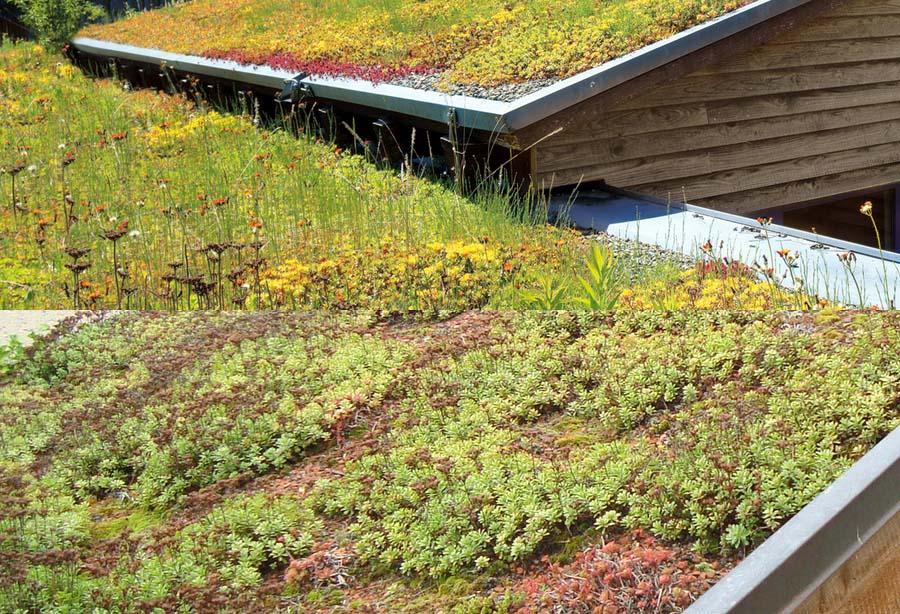 Carport mit Dachbegrünung / Pflanzen